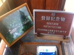 150418 (102)鳴海醸造店_庭園