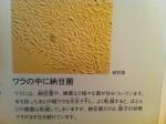 160628 (86)タカノフーズ水戸工場_納豆菌