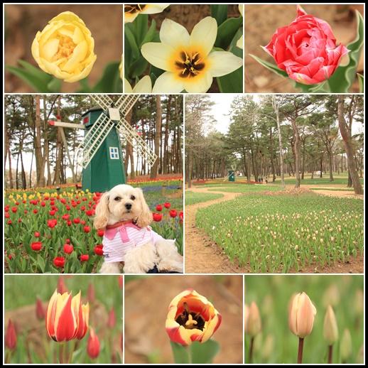 チューリップの森2 4月3日