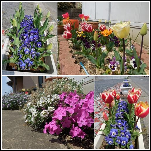 庭の花 4月9日