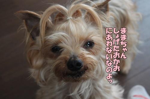 IMG_85940.jpg