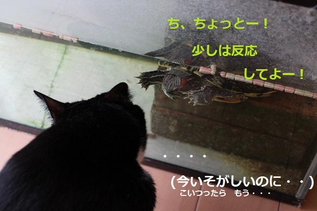 かめちゃん2