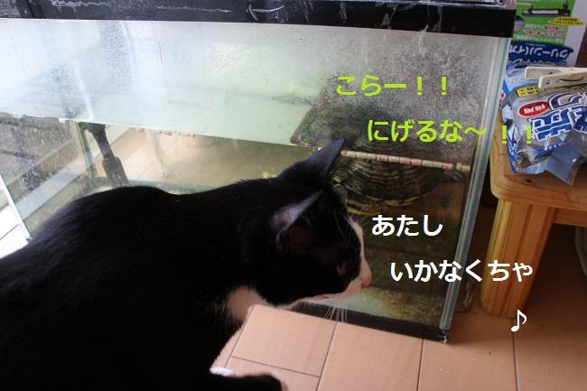 かめちゃん3
