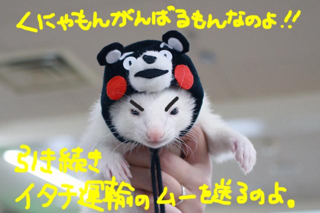 160601kunyamon.jpg