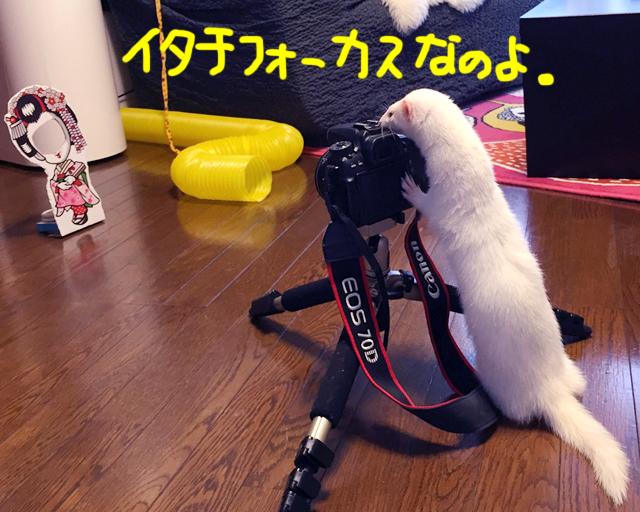 160610b.jpg