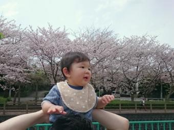 桜とこばぶ