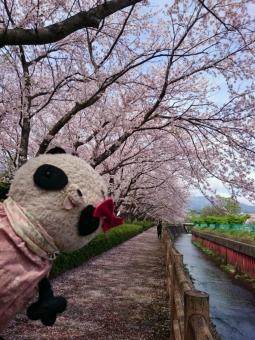 おばぶと桜並木