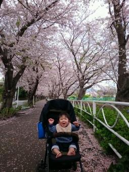 こばぶ桜並木にて