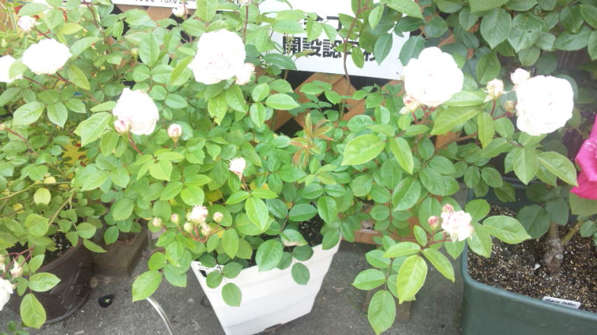 moblog_2362e4e6.jpg