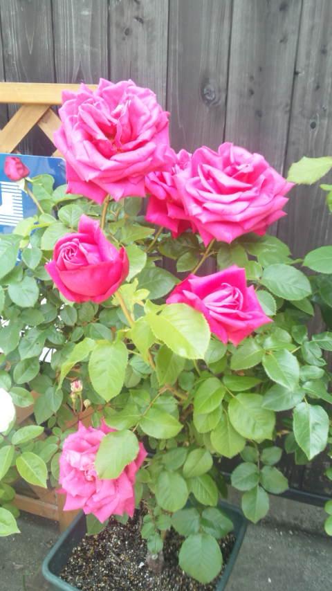 moblog_b413fa34.jpg