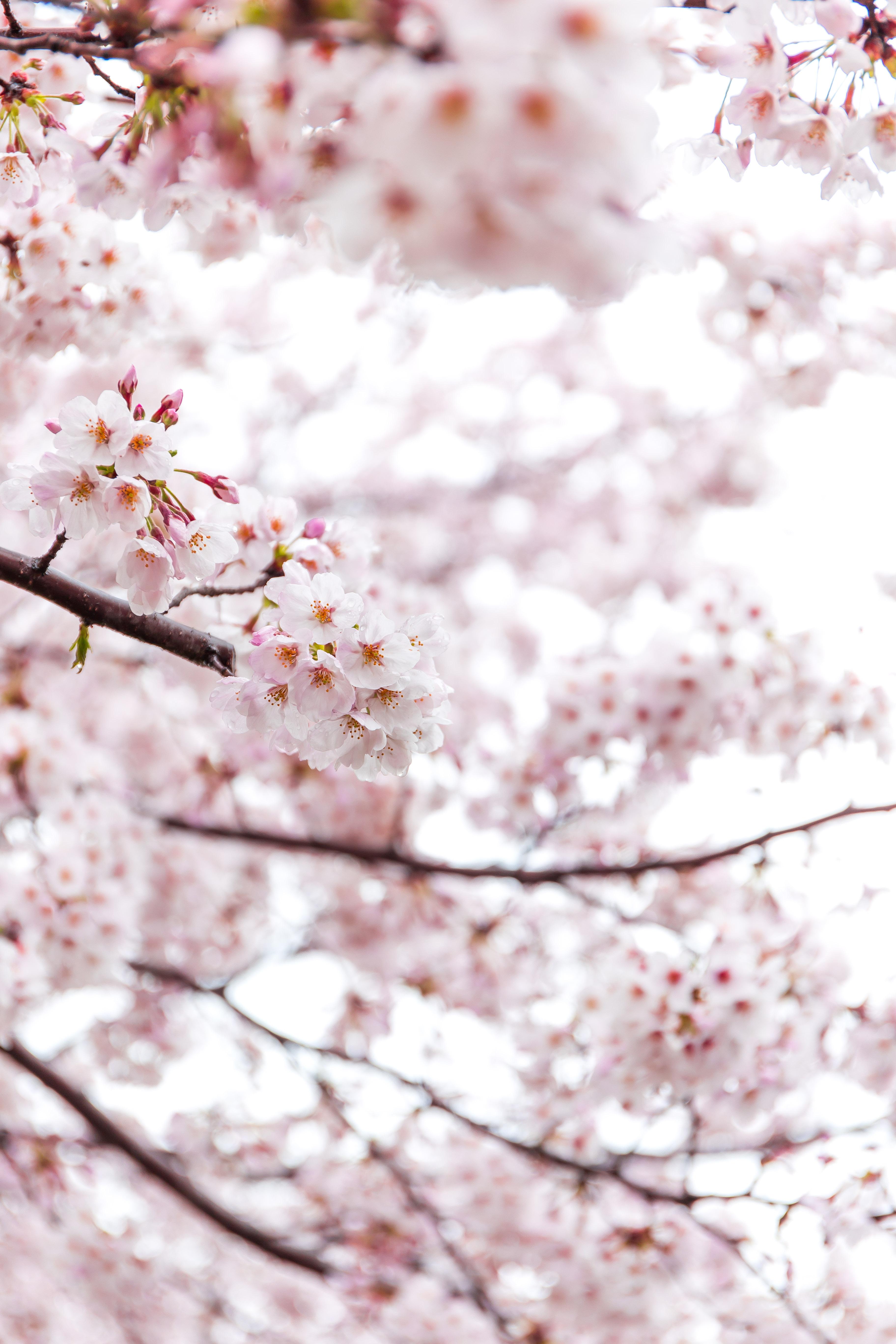 舎人公園でお花見からの「稲毛屋」(1)
