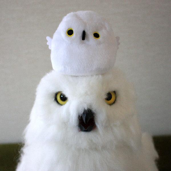 シロフクロウと友人がくれたシロフクロウのぬいぐるみ