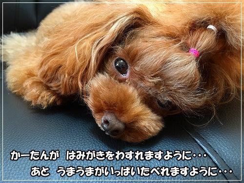 s-IMG_2768.jpg