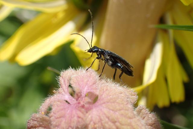 不明の甲虫