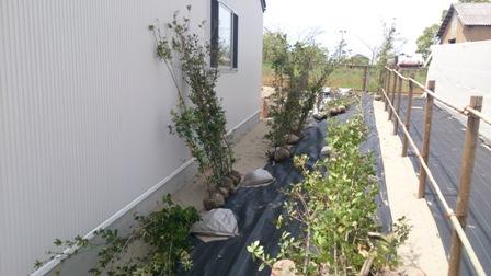 ウバメガシ生垣植栽