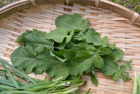 カラシ菜の葉