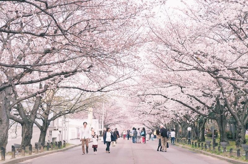 万博公園 桜