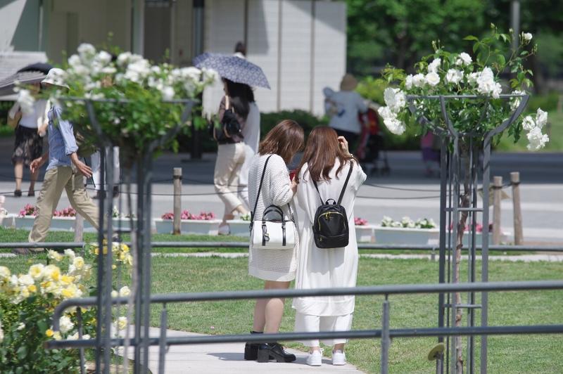 中之島公園ばら園 春バラ 2016