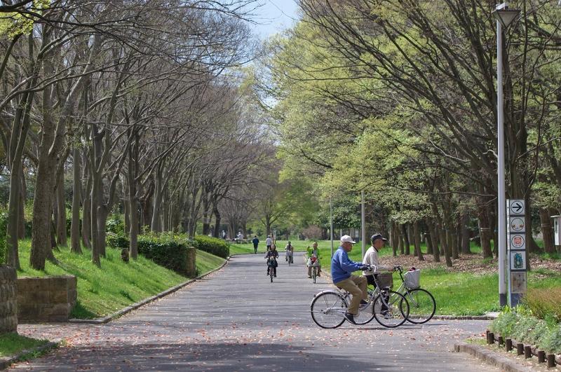 大泉緑地 春