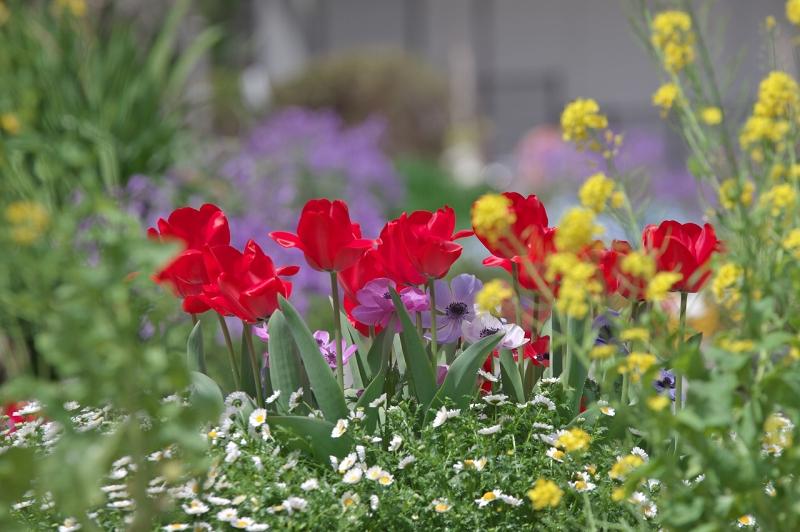 大泉緑地 春の花壇