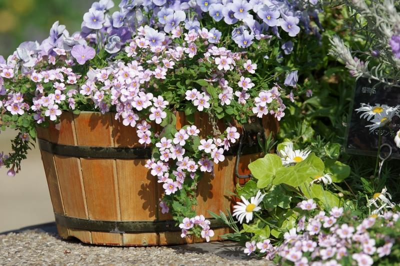 明石海峡公園 花