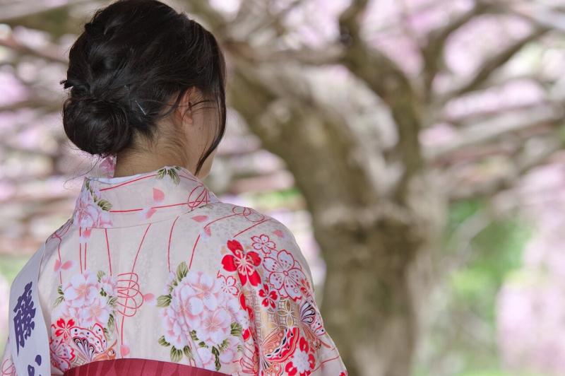 子安地蔵寺の藤むすめ2016