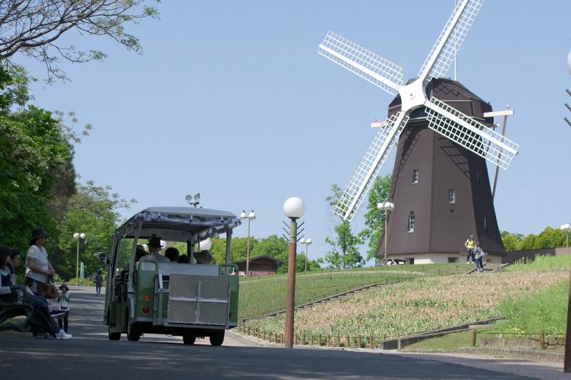 鶴見緑地公園 チューリップ畑 風車