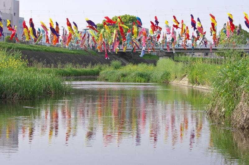 摂津・大正川に泳ぐ鯉のぼりたち