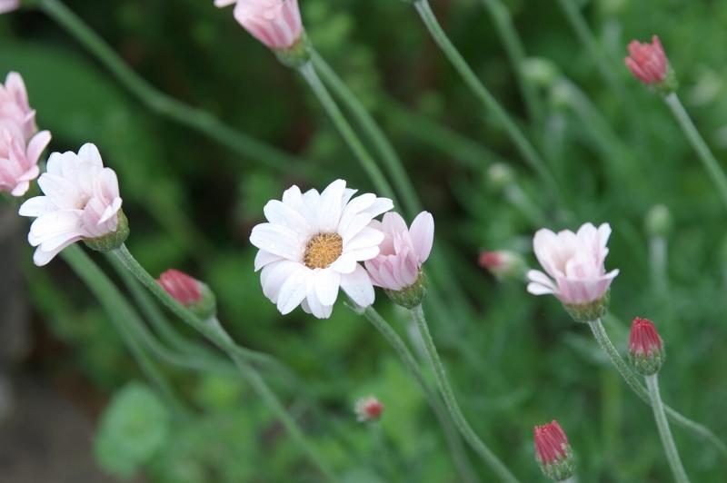 泉南市 熊野街道の花々