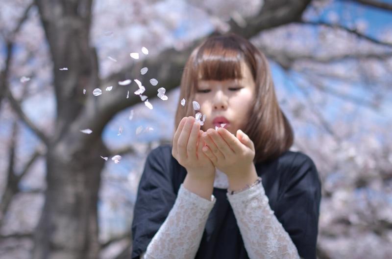 曽我川の桜とポートレート