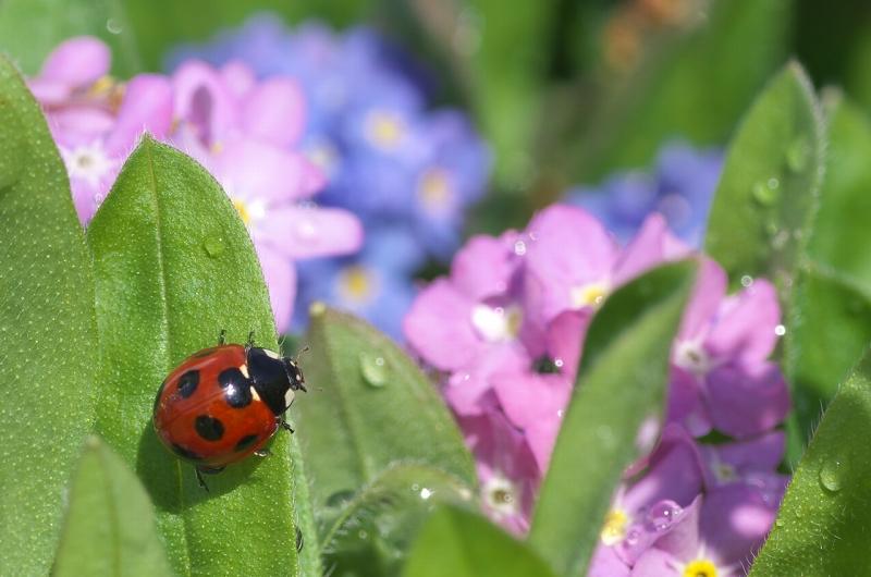 大泉緑地 春 花壇 てんとう虫