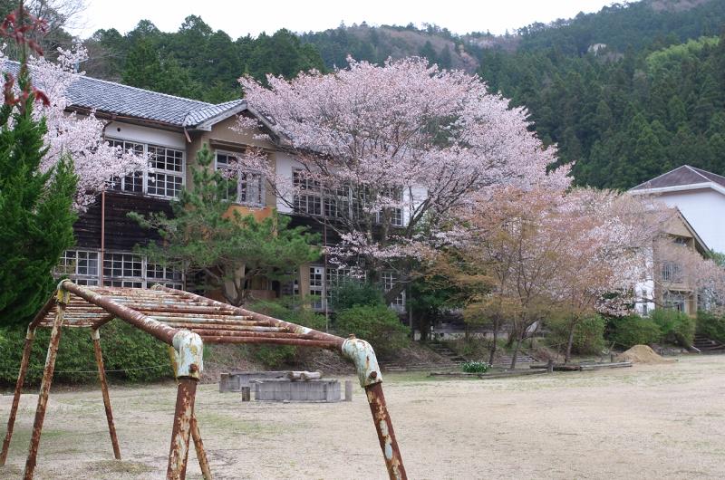 旧丹生小学校の桜 廃校の桜
