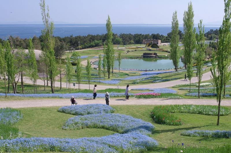 明石海峡公園 ネモフィラ