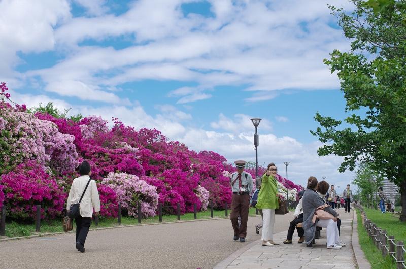 浅香山つつじまつり2016