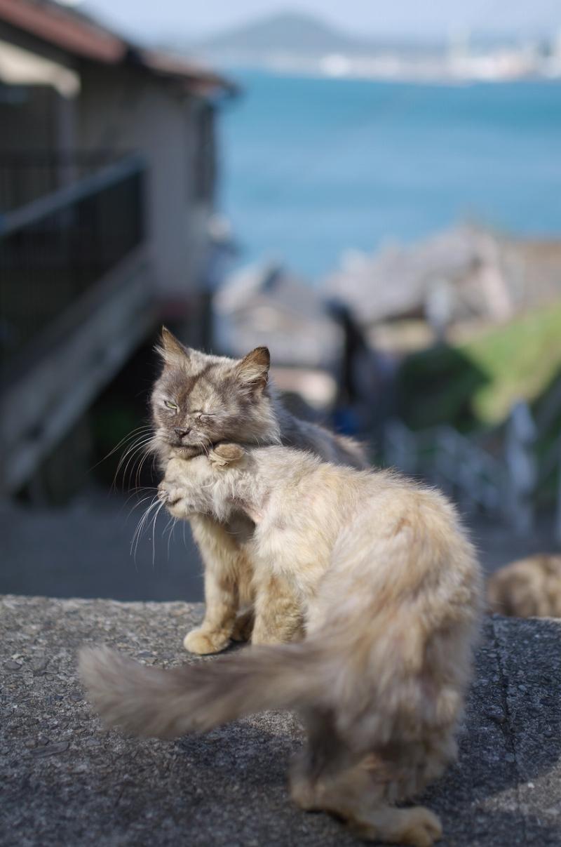 下津港 戸坂 漁村 猫