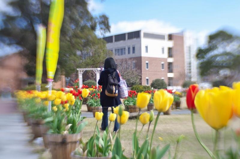 洲本アルチザンスクエアの冬咲きチューリップ