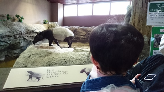 円山動物園10バク