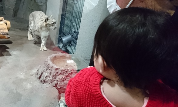 円山動物園16ユキヒョウ