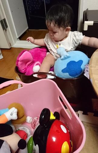 おもちゃ箱に入るのが好き!?