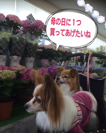 fc2blog_2016041720490125b.jpg