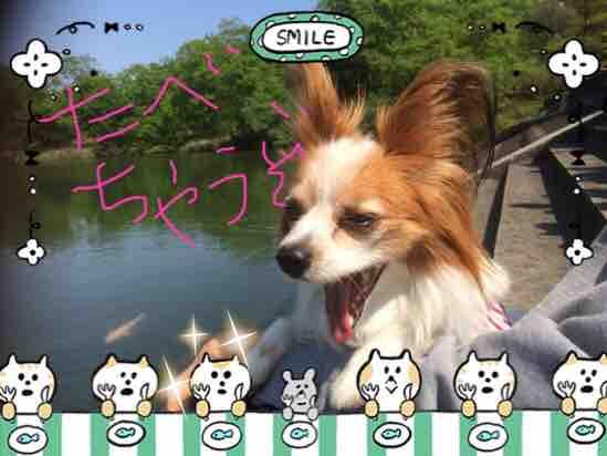 fc2blog_201604302107236c0.jpg