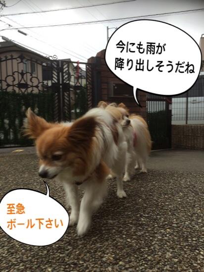 fc2blog_201605162044170fd.jpg