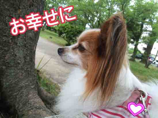 fc2blog_20160607212003841.jpg