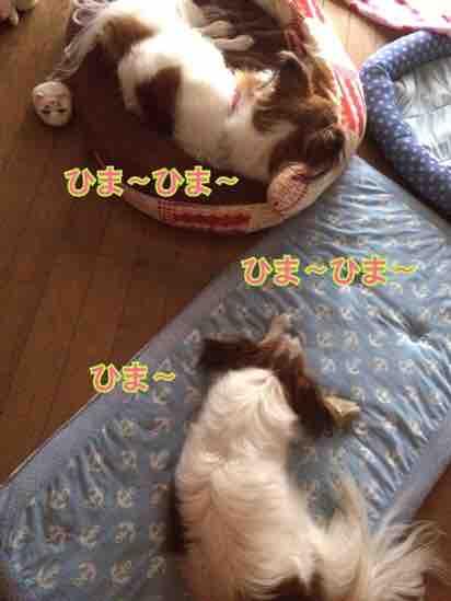 fc2blog_20160624213130a50.jpg