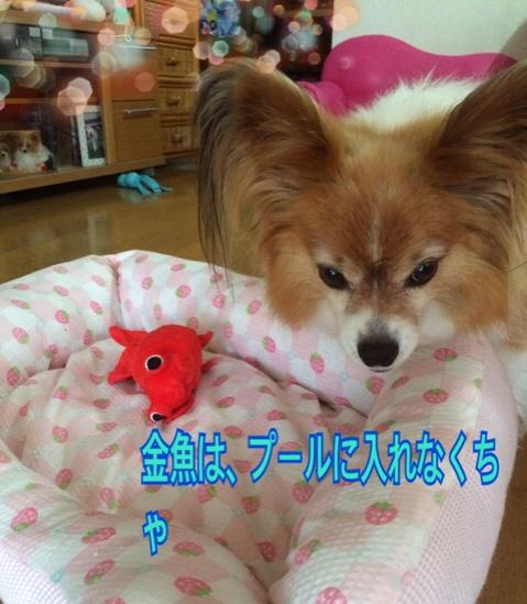 fc2blog_20160709212111c3c.jpg