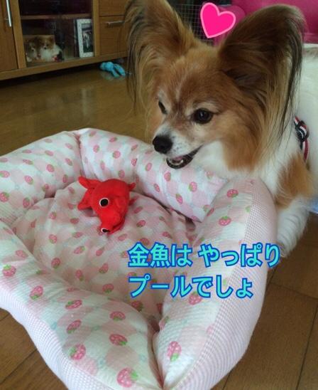 fc2blog_20160709212220744.jpg