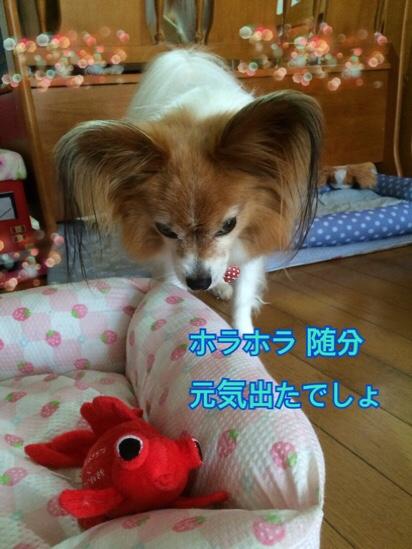 fc2blog_20160709212324703.jpg