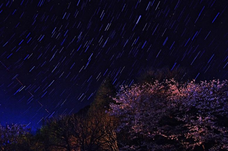 社宅の横の桜