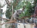 H28 4月    動物園2