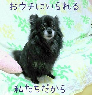 2016-04-16_23_48597.jpg